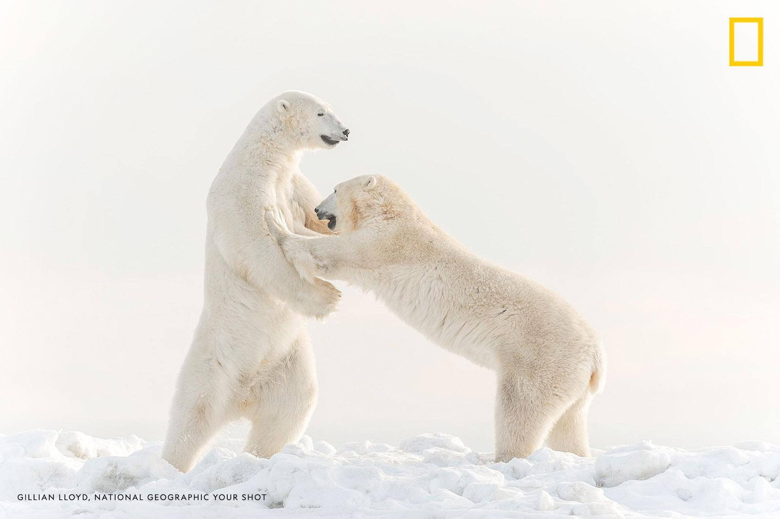 Help us caption this image by Your Shot photographer Gillian Lloyd: https://on.natgeo.com/2J8bL3z