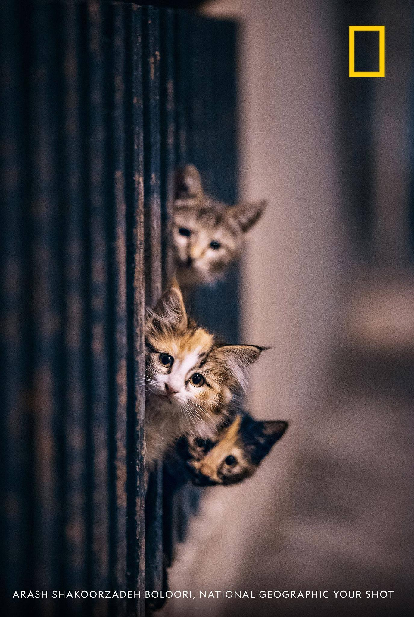 Happy National Cat Day! Photographer Arash Shakoorzadeh Boloori caught a quick moment with these curious cats in Tehran, Iran. What are some of your favorite photos of felines? https://on.natgeo.com/2D9TZNb