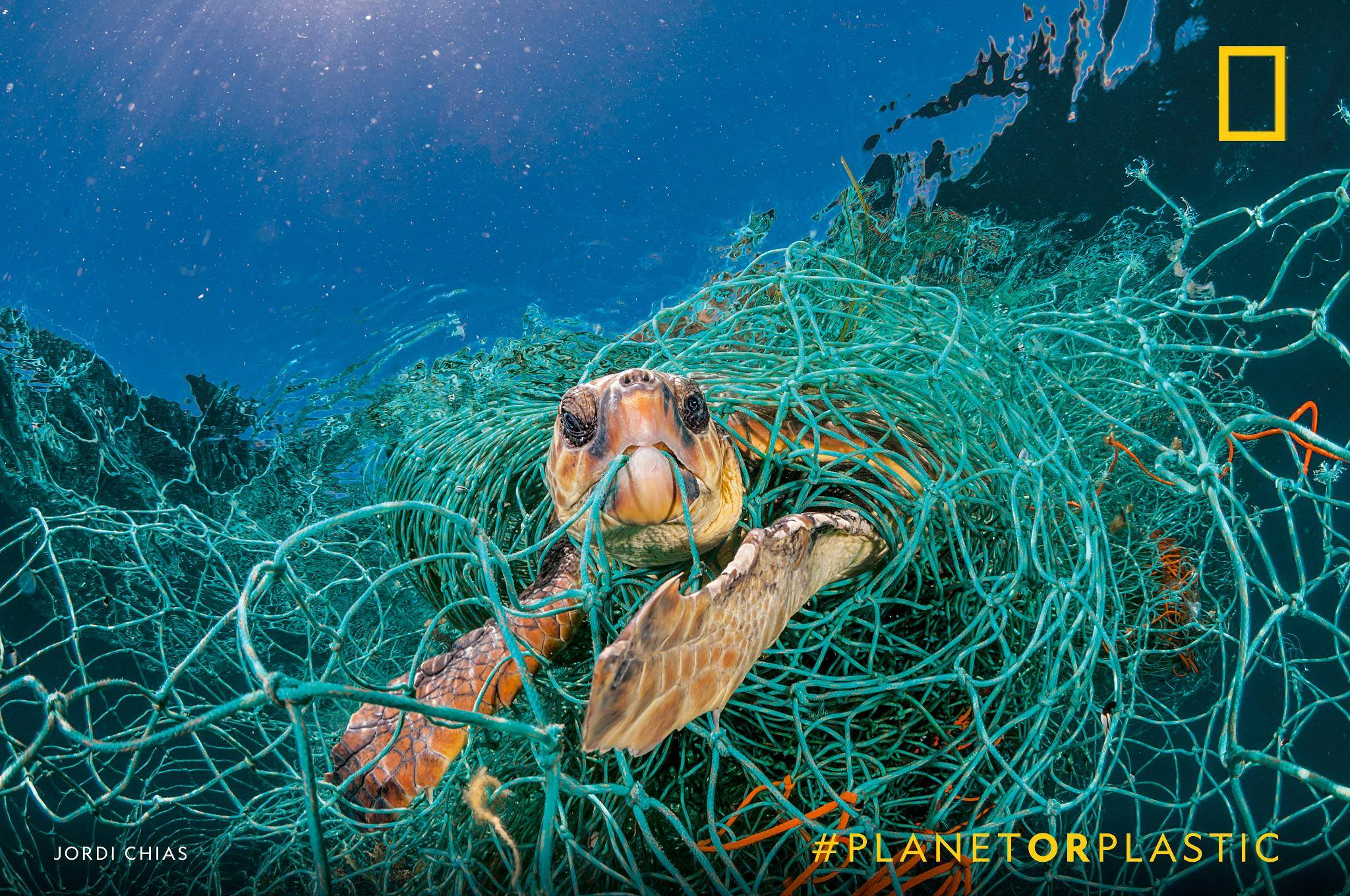 Some 700 species of marine animals have been reported—so far—to have eaten or become entangled in plastic. How are you reducing your single-use plastics in 2019? https://on.natgeo.com/2RRYMGZ