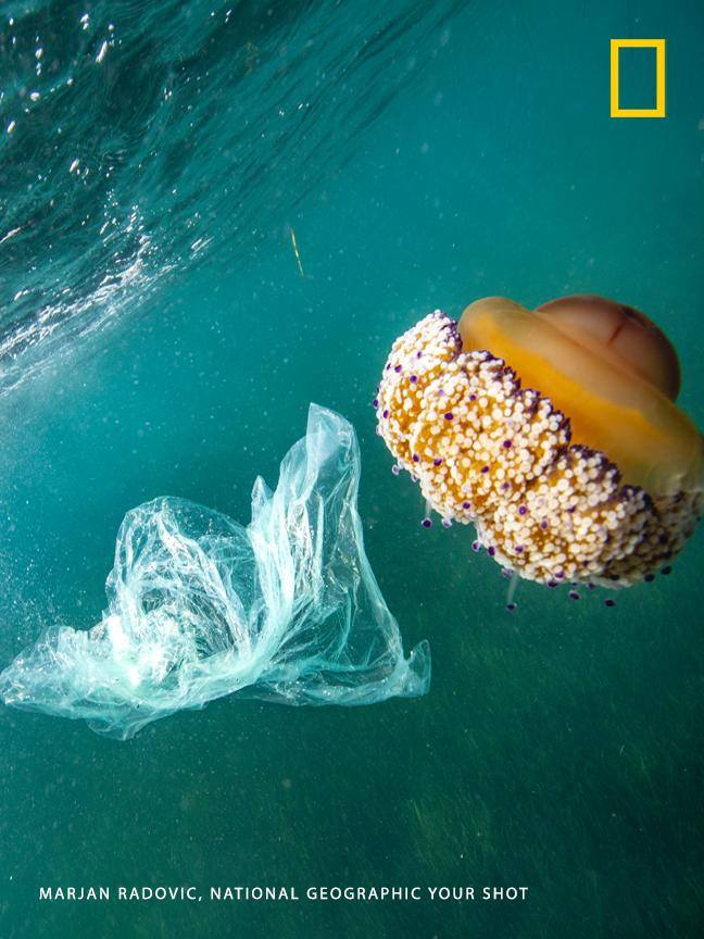 """It's choking our oceans, poisoning our food and water supply, and wreaking havoc on the health and well-being of humans and wildlife worldwide,"" writes Your Shot photographer Marjan Radovic. Take the pledge to reduce single-use plastic in your life: https://on.natgeo.com/2MVPIPy #PlanetOrPlastic"