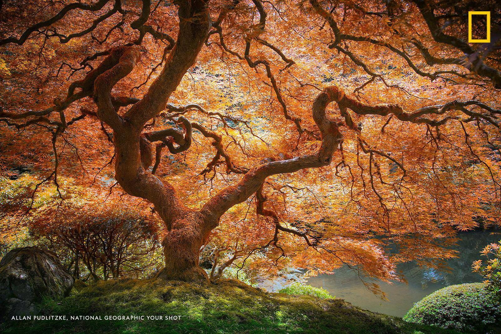 """""""My favorite part about trees is that we all see something different in them,"""" writes Your Shot photographer Allan Pudlitzke. """"The more unique and intricate the tree, the more is hidden within its being."""" https://on.natgeo.com/2Fu5Vcs"""