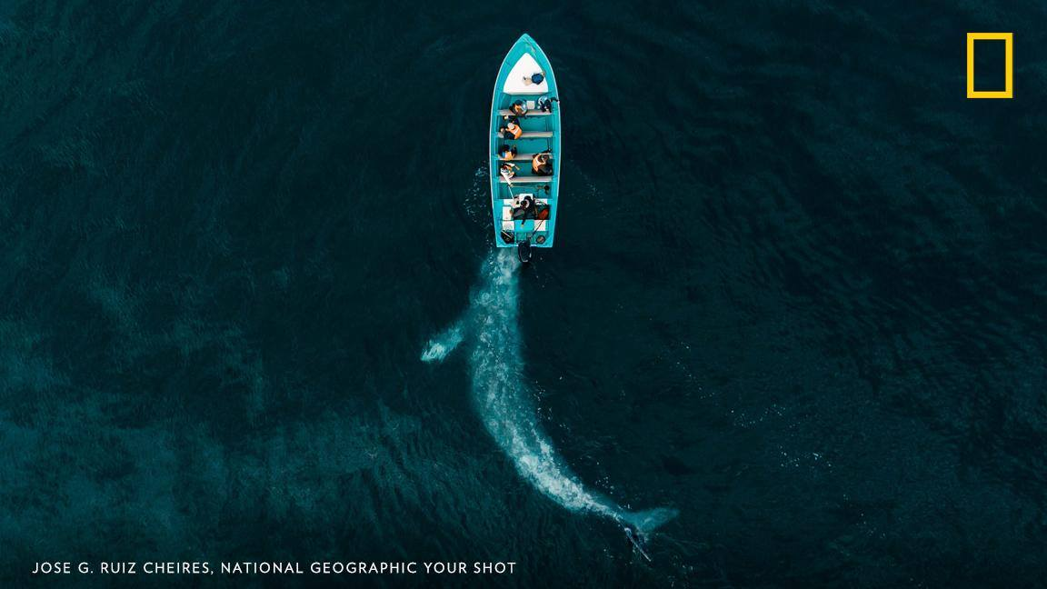 From above, this image by Your Shot photographer Jose G. Ruiz Cheires reveals the moment a gray whale meets a boat near Adolfo Lopez Mateos, Mexico. https://on.natgeo.com/2K4LMhK