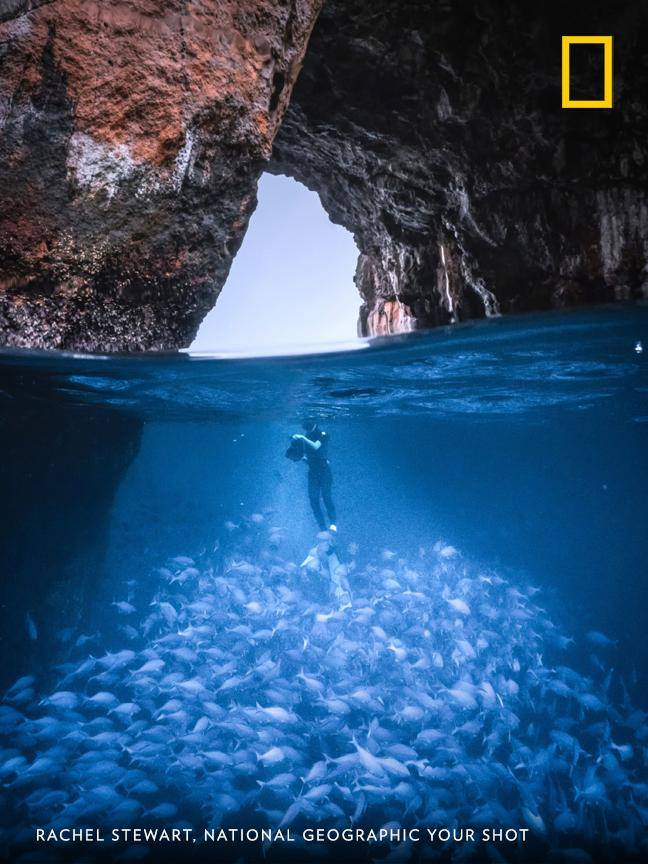 """""""With numerous caves, tunnels and an abundance of marine life, the Poor Knights Islands Marine Reserve is a haven for many underwater species. It's also a popular spot for divers,"""" writes photographer Rachel Stewart. https://on.natgeo.com/2W8o3Pm"""