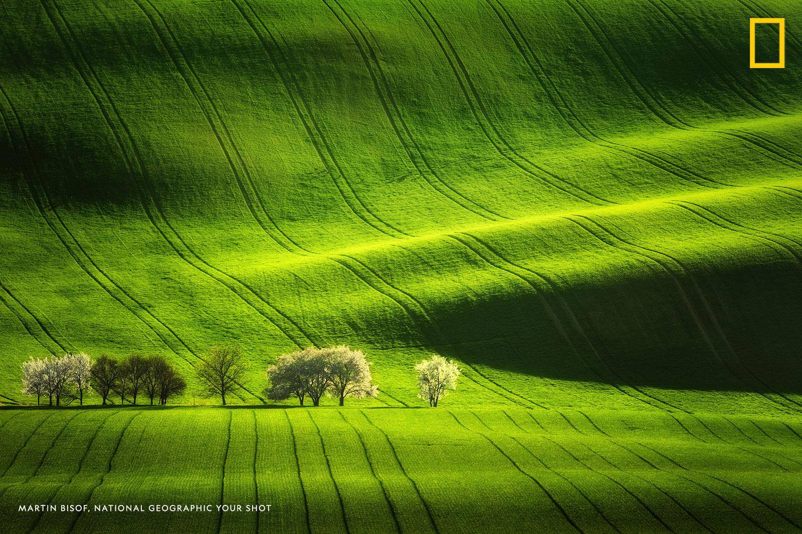 """Your Shot photographer Martin Bisof found out that he didn't need to travel far to find this beautiful landscape. """"In the Moravian region located in the Czech Republic it's possible to find such beauty during the spring time."""" https://on.natgeo.com/2Pyzdu1"""