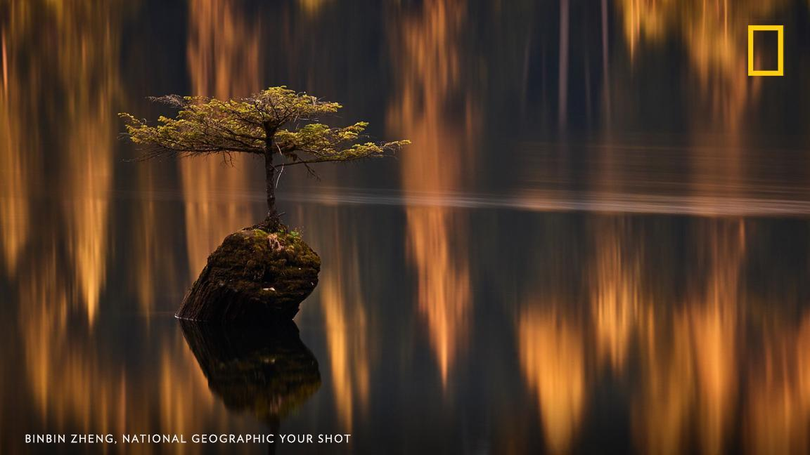 """""""No trip to Port Renfrew would be complete without a mandatory visit to this little fir tree sprouting out of an old log on Fairy Lake,"""" writes Your Shot photographer BinBin Zheng. https://on.natgeo.com/2JRrbeY"""
