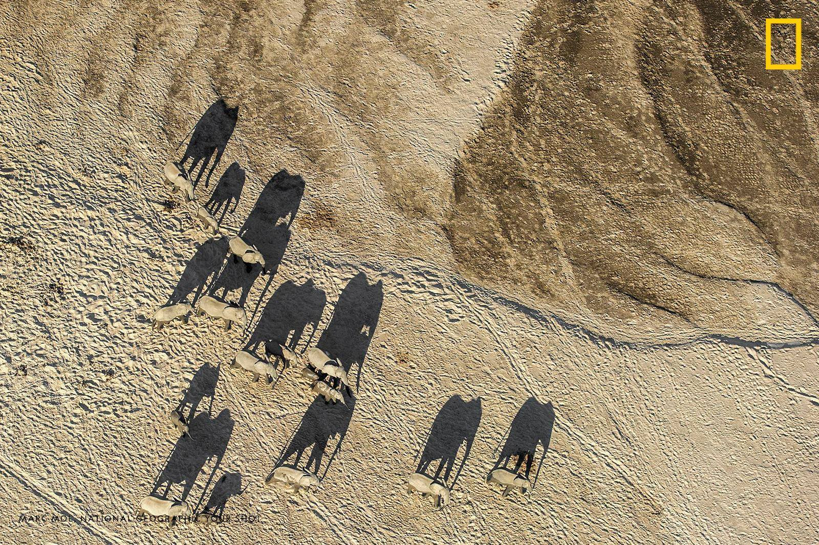 """""""A herd of elephants cast incredible shadows across the dry Luangwa Riveeer floodplain as they journey to the refreshing waters of this dwindling river,"""" writes Your Shot photographer Marc Mol. https://on.natgeo.com/2K13wcg"""
