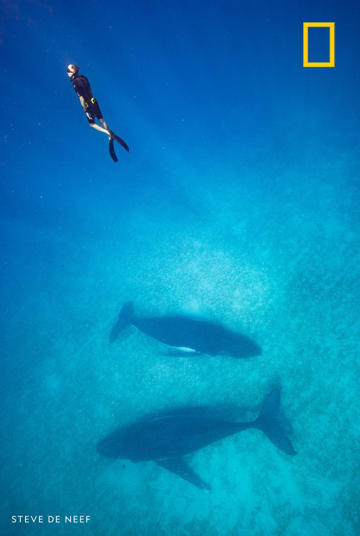 """On assignment for NatGeo, Brian Skerry swims with humpback whales in the South Pacific. In our podcast """"Overheard"""" Skerry tells us about the burgeoning study of """"whale culture""""—and why these super smart cetaceans may have a lot more in common with us than we'd ever imagined. https://on.natgeo.com/overheard"""