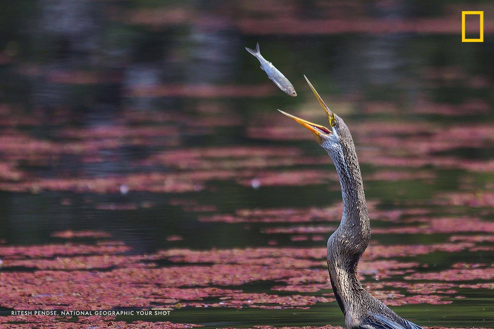Help us caption this image by Your Shot photographer Ritesh Pendse: https://on.natgeo.com/2liWcy6