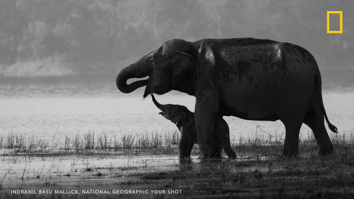 """I was fortunate just at the right place when I visited Jim Corbett National Park,"" writes Your Shot photographer Indranil Basu Mallick. ""The beautiful bond that was exhibited by the duo is etched in my memory for a lifetime."" https://on.natgeo.com/32WHcHN"