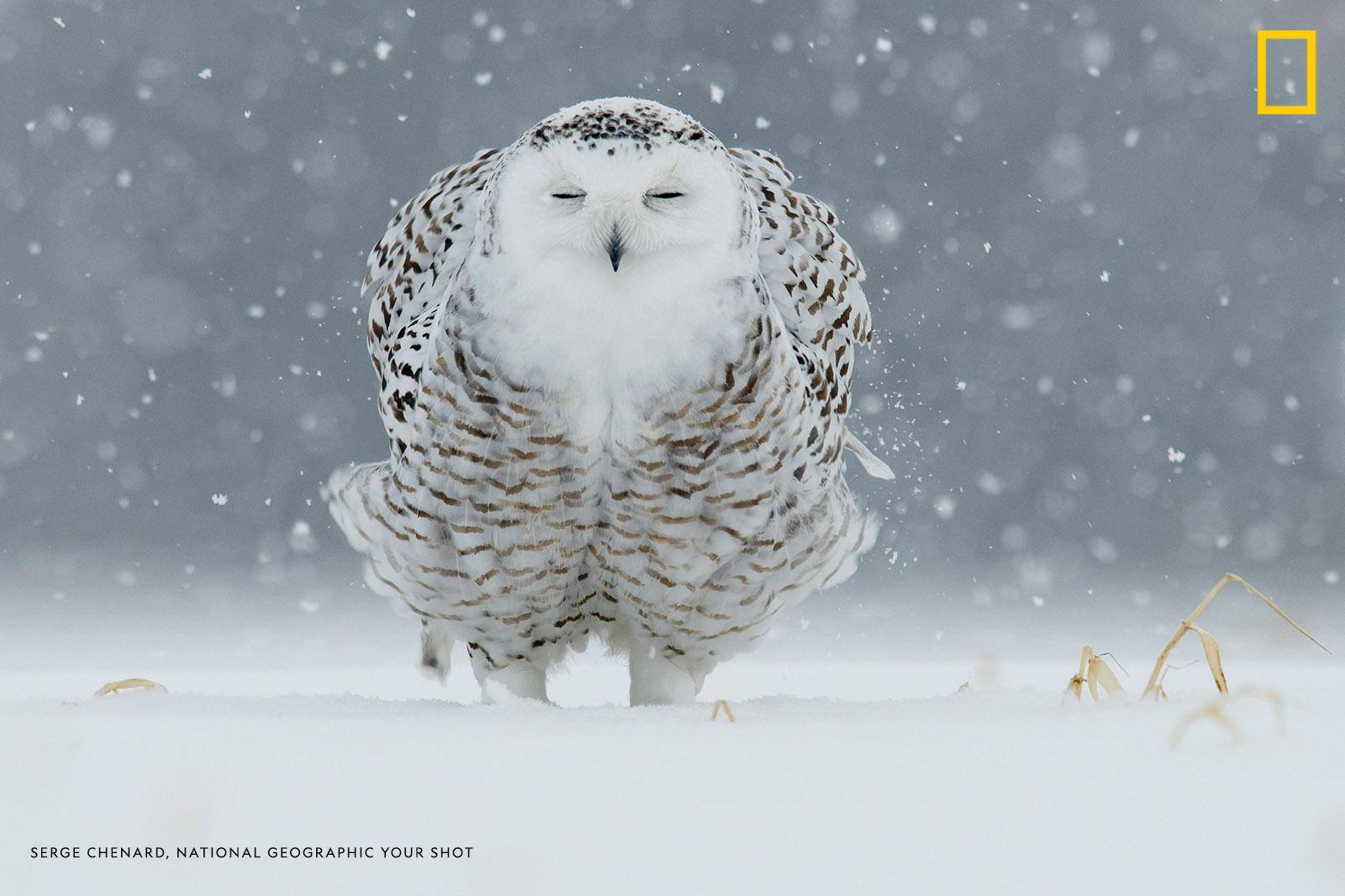 """I crawled very slowly on the ground, only a short distance,"" writes Your Shot photographer Serge Chenard. ""Suddenly, the snow begins, and once I was able to stabilize my camera on the ground, I documented this beautiful scene."" https://on.natgeo.com/2JX5ny2"