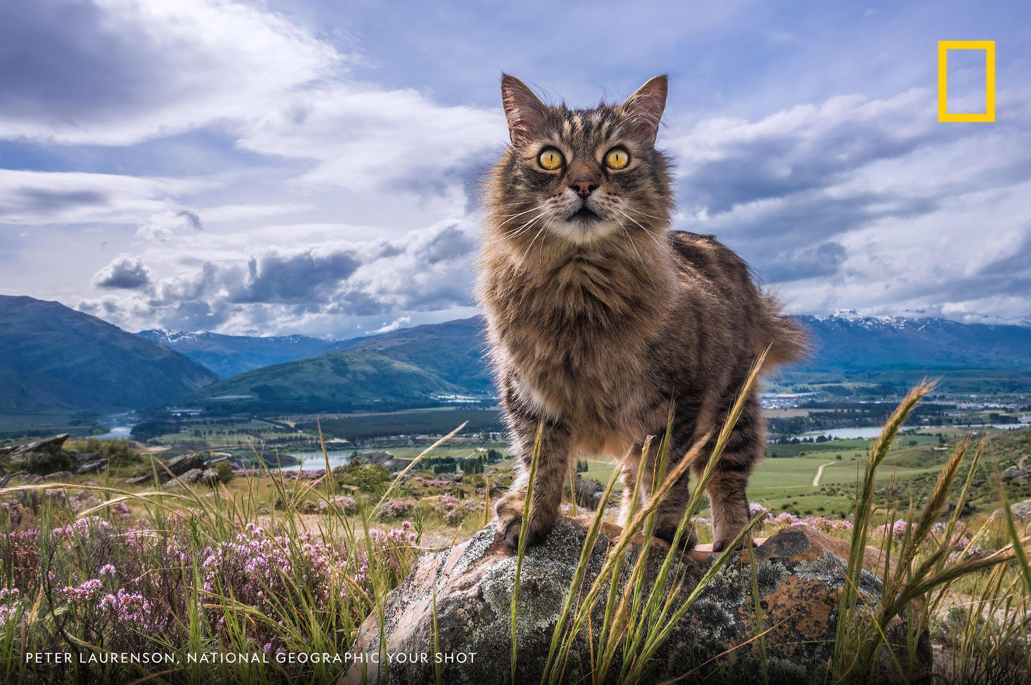 "Happy International Cat Day! ""Scruff keeps an eye on things from his high country perch [in] Bannockburn, Central Otago, New Zealand,"" writes Your Shot photographer Peter Laurenson. What's your fearless feline's favorite perch? https://on.natgeo.com/2YRdggO"