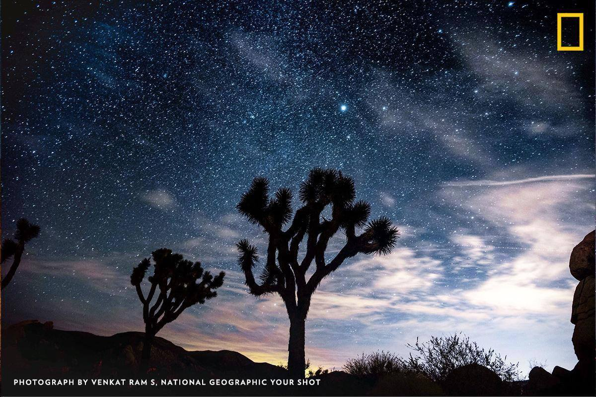 See the iconic Joshua trees—in the national park by the same name—silhouetted against a perfect night sky in this photo by Your Shot photographer Venkat Ram S. https://on.natgeo.com/2KSPida