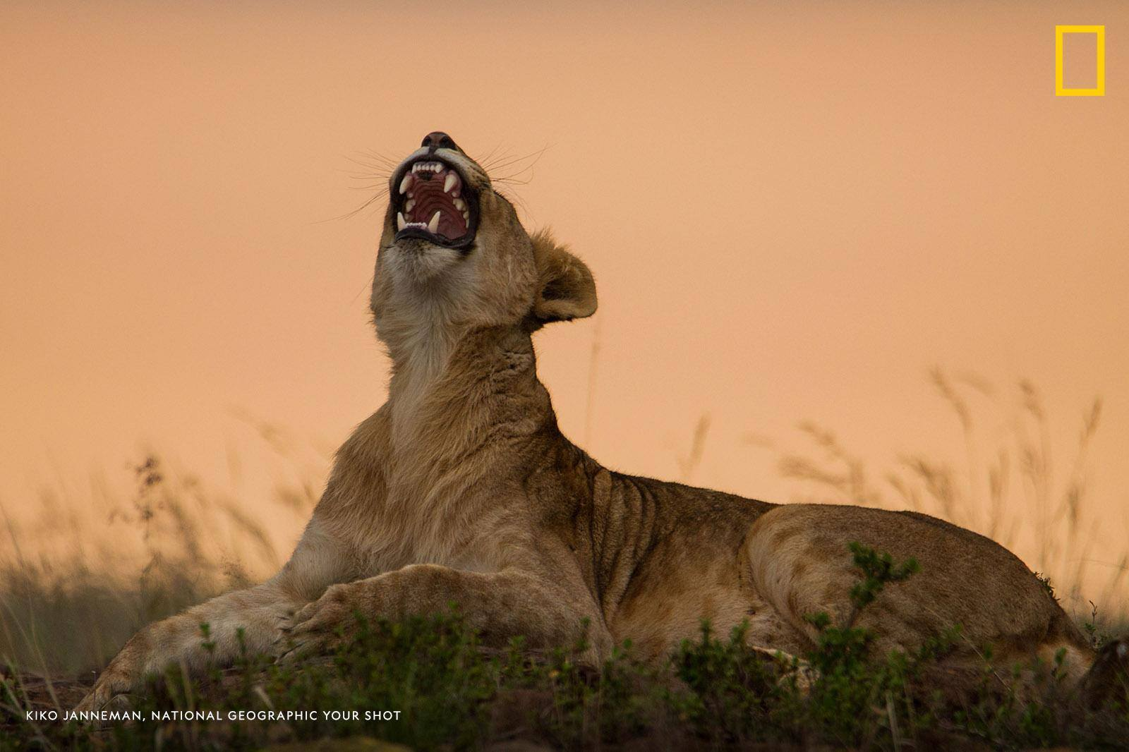 Help us caption this image by Your Shot photographer Kiko Janneman: https://on.natgeo.com/2YY4XQv