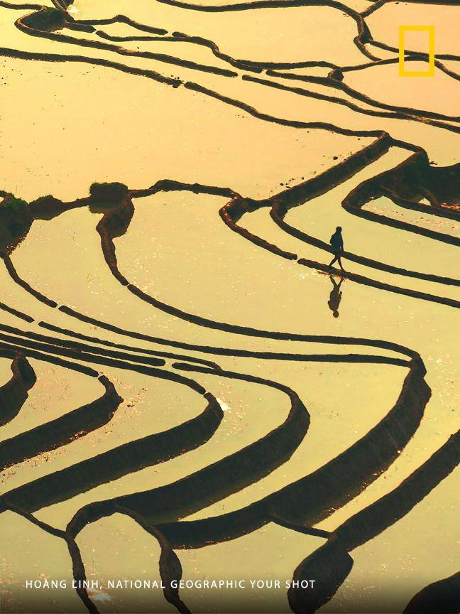 Photographer Hoàng Linh trekked partway up a mountain in northwestern Vietnam's Lao Cai province to get this bird's-eye view of the terraced rice fields flooded by the rainy season. https://on.natgeo.com/2ZEkvsR